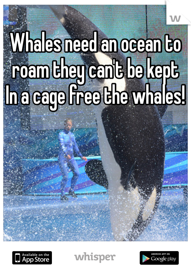 Whales need an ocean to roam they can't be kept In a cage free the whales!