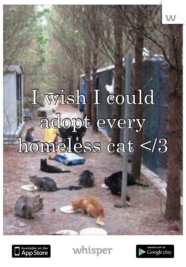 I wish I could adopt every homeless cat </3