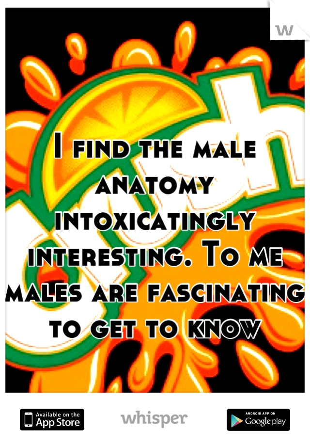 I find the male anatomy intoxicatingly interesting. To me males are fascinating to get to know