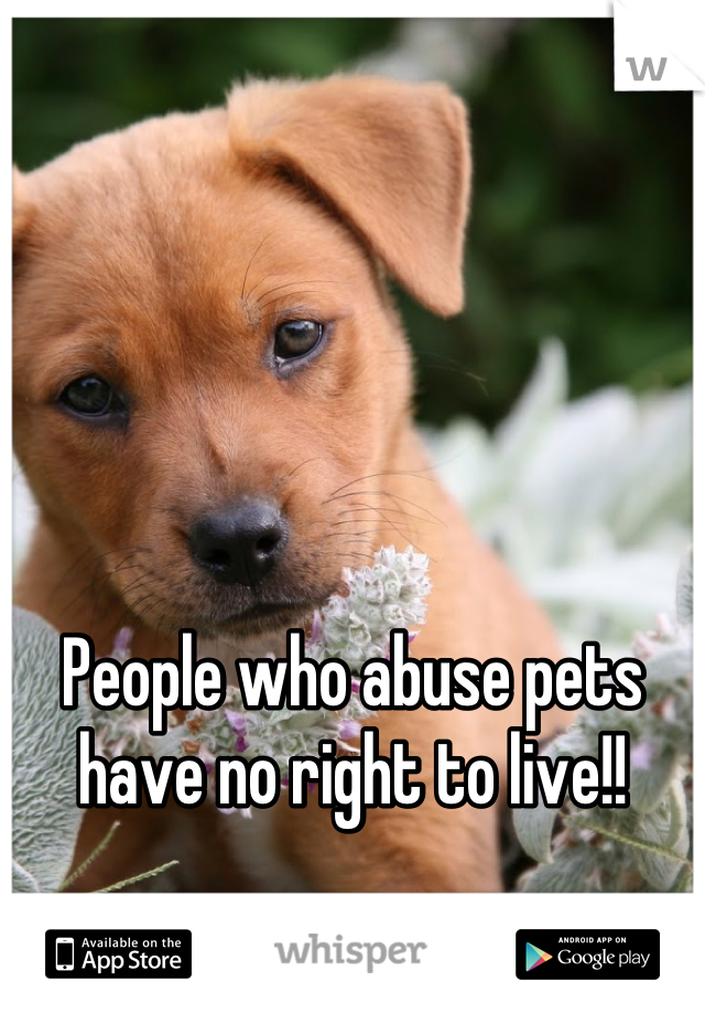 People who abuse pets have no right to live!!