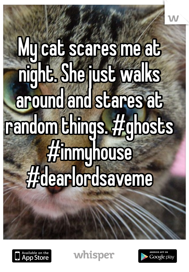 My cat scares me at night. She just walks around and stares at random things. #ghosts #inmyhouse #dearlordsaveme