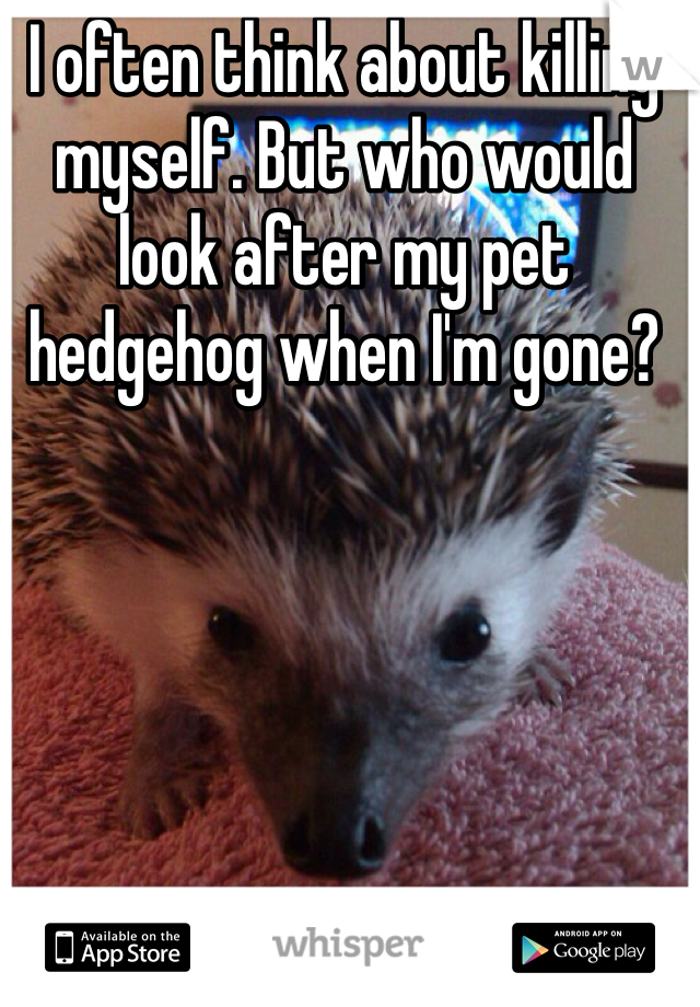 I often think about killing myself. But who would look after my pet hedgehog when I'm gone?