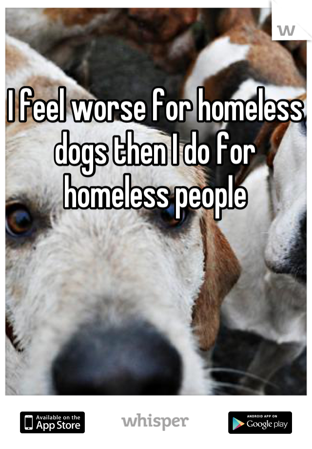 I feel worse for homeless dogs then I do for homeless people