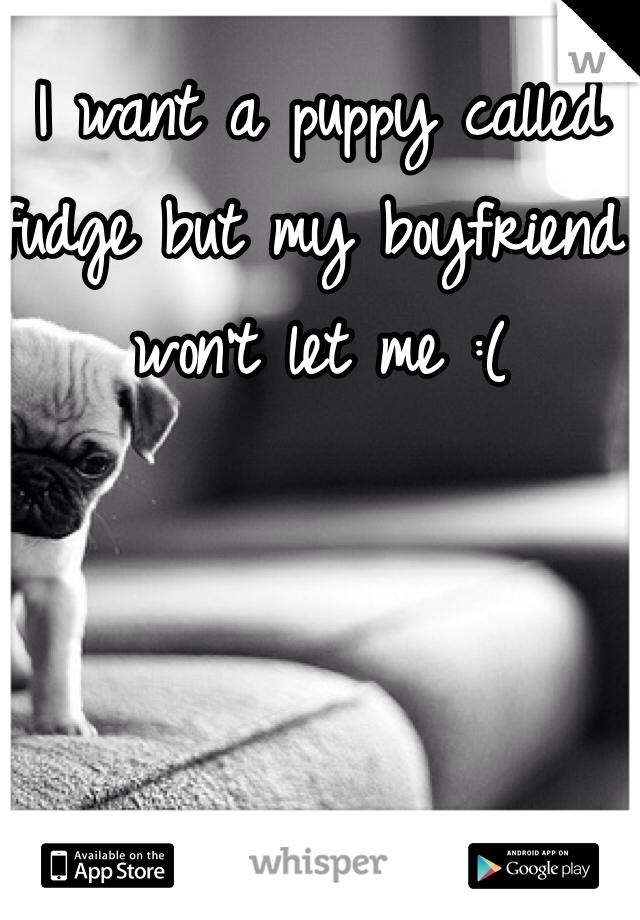 I want a puppy called fudge but my boyfriend won't let me :(