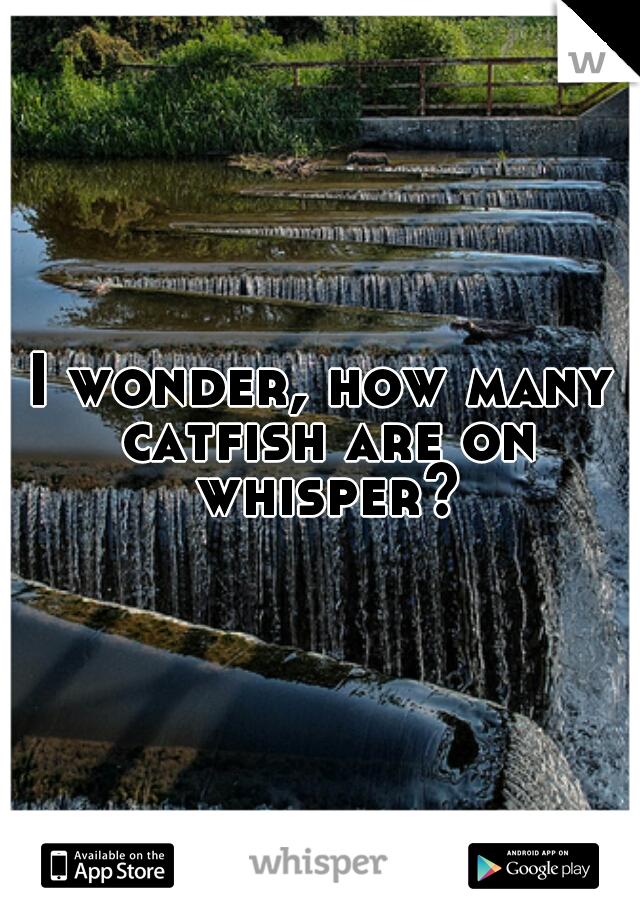 I wonder, how many catfish are on whisper?
