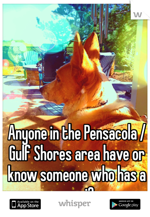 Anyone in the Pensacola / Gulf Shores area have or know someone who has a corgi?