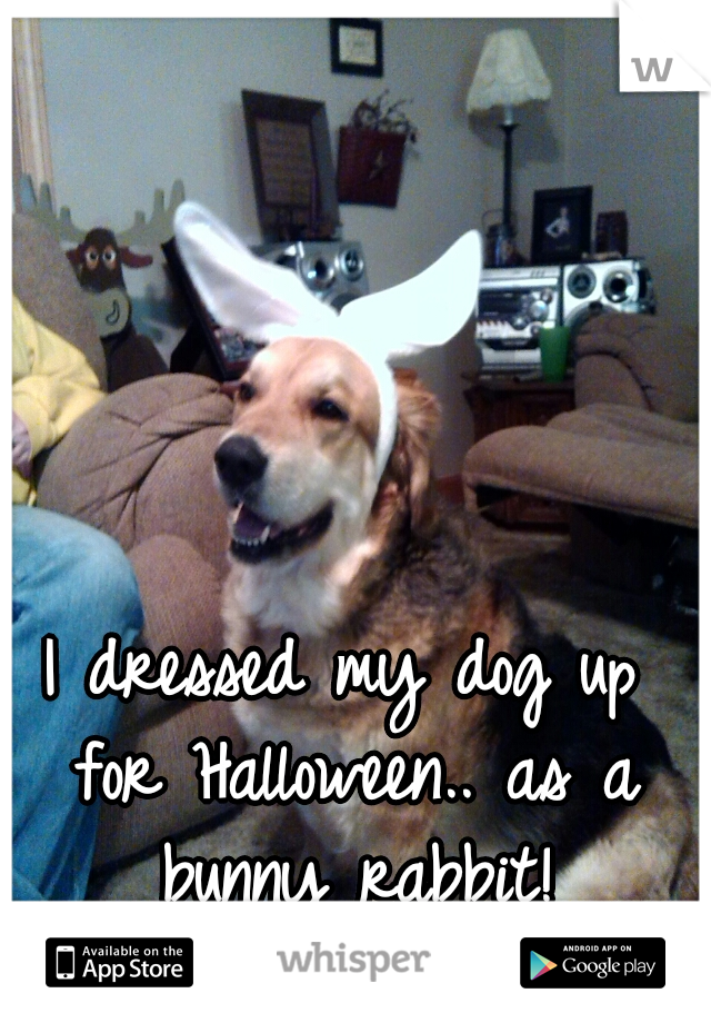 I dressed my dog up for Halloween.. as a bunny rabbit!