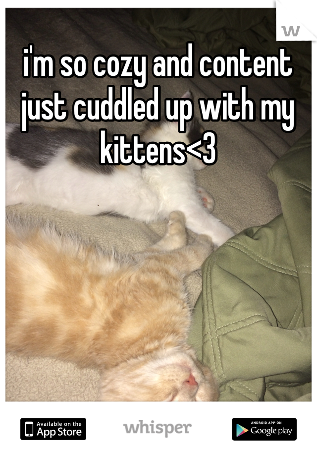 i'm so cozy and content just cuddled up with my kittens<3