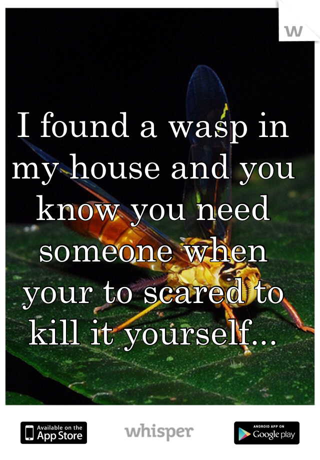 I found a wasp in my house and you know you need someone when your to scared to  kill it yourself...
