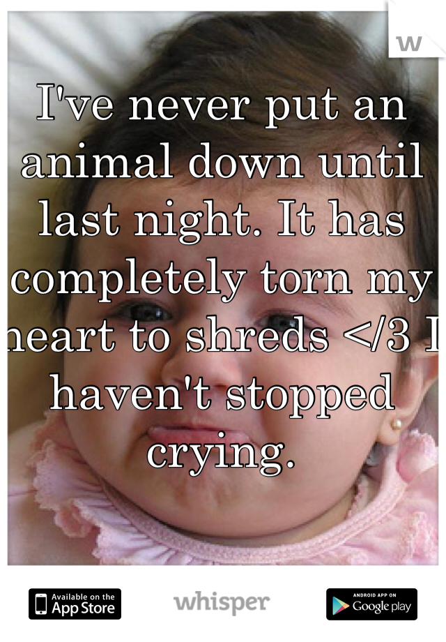 I've never put an animal down until last night. It has completely torn my heart to shreds </3 I haven't stopped crying.