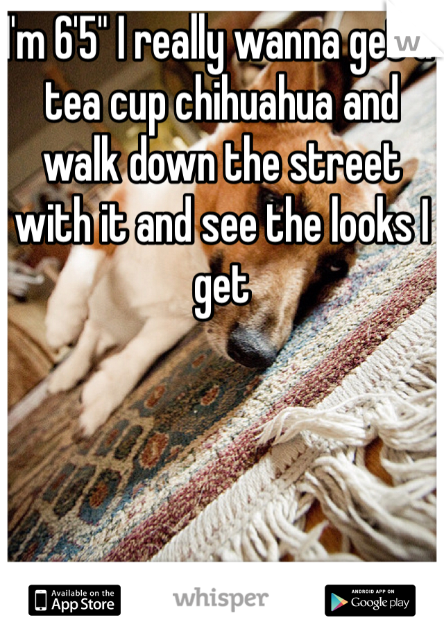 "I'm 6'5"" I really wanna get a tea cup chihuahua and walk down the street with it and see the looks I get"