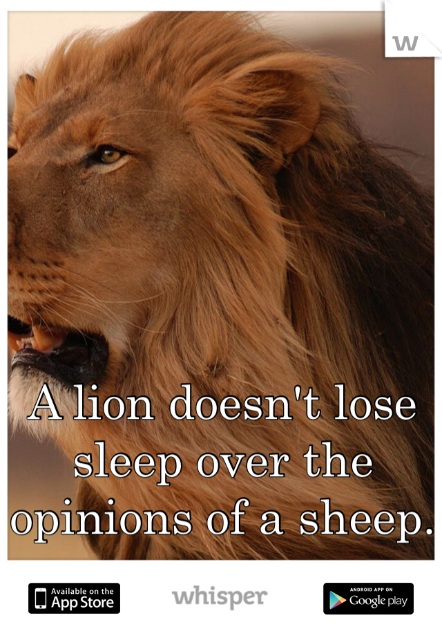A lion doesn't lose sleep over the opinions of a sheep.