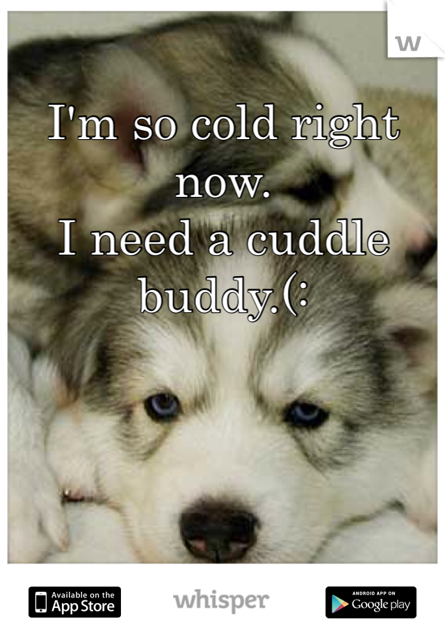 I'm so cold right now.  I need a cuddle buddy.(: