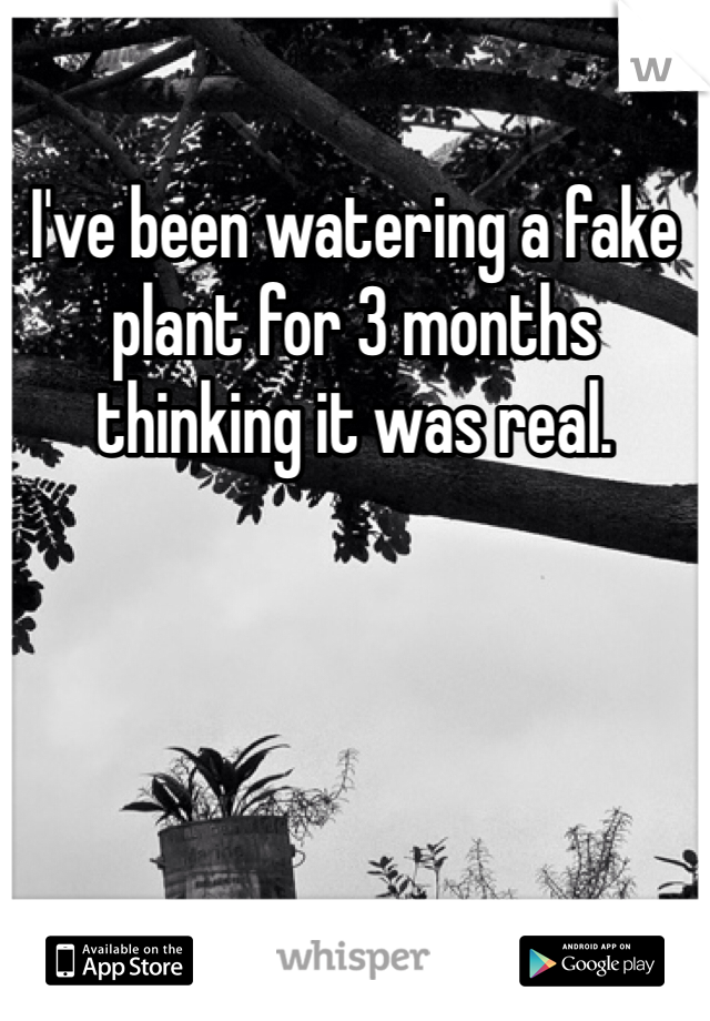 I've been watering a fake plant for 3 months thinking it was real.