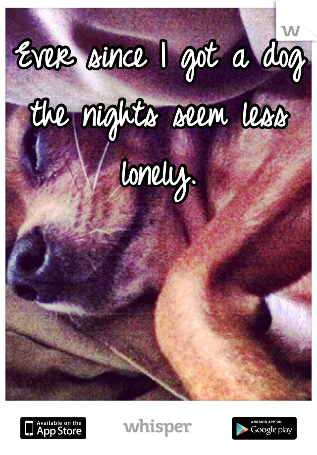 Ever since I got a dog the nights seem less lonely.