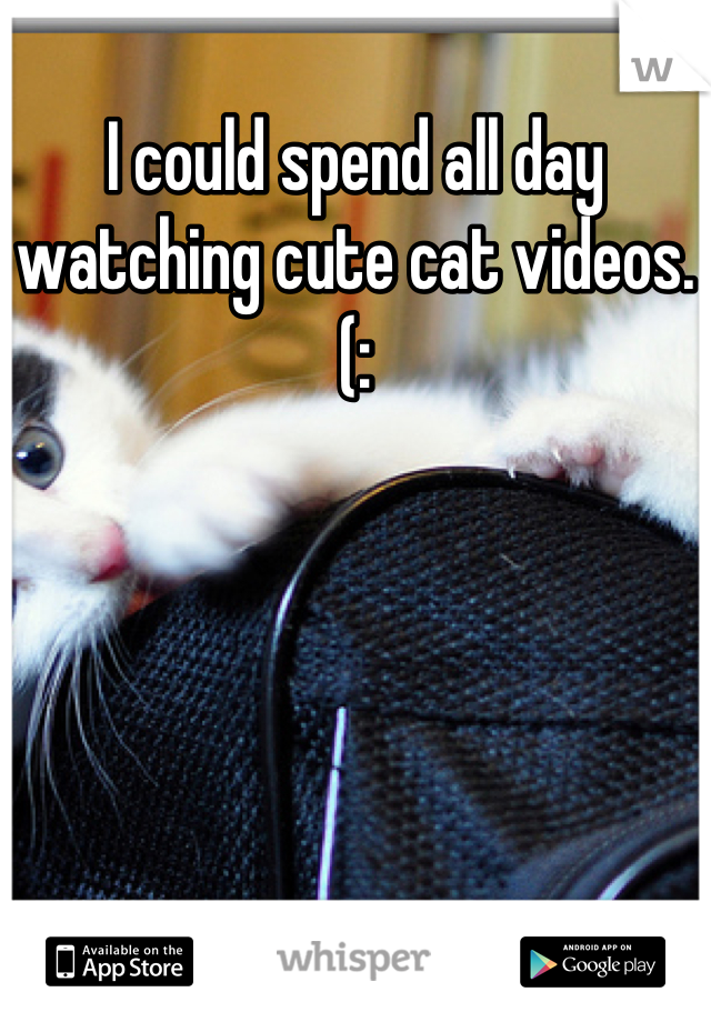 I could spend all day watching cute cat videos.(: