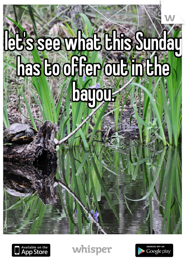 let's see what this Sunday has to offer out in the bayou.