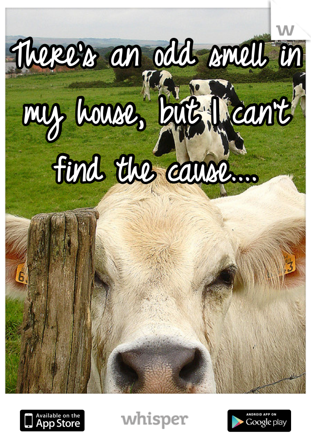 There's an odd smell in my house, but I can't find the cause....