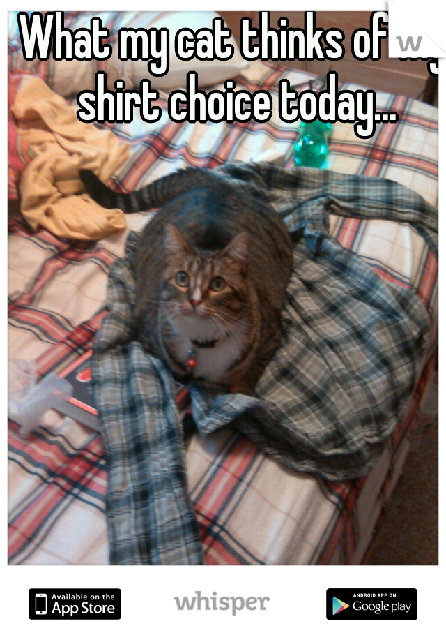 What my cat thinks of my shirt choice today...