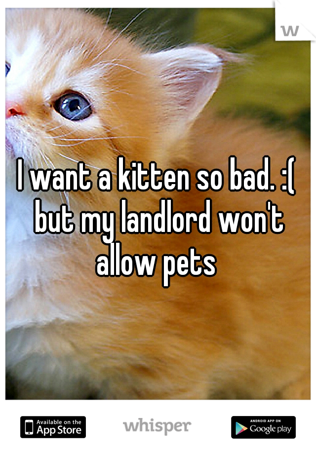 I want a kitten so bad. :( but my landlord won't allow pets