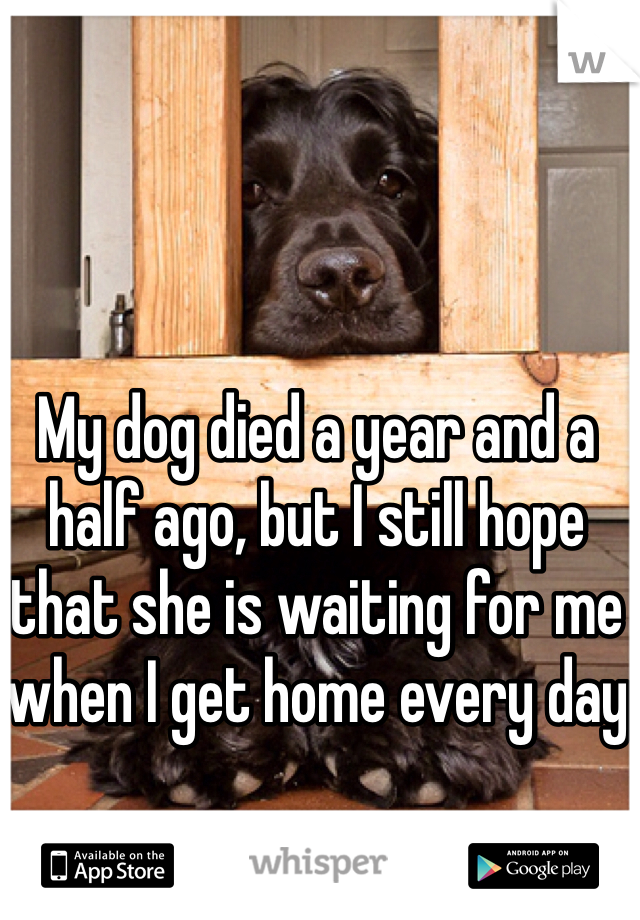 My dog died a year and a half ago, but I still hope that she is waiting for me when I get home every day