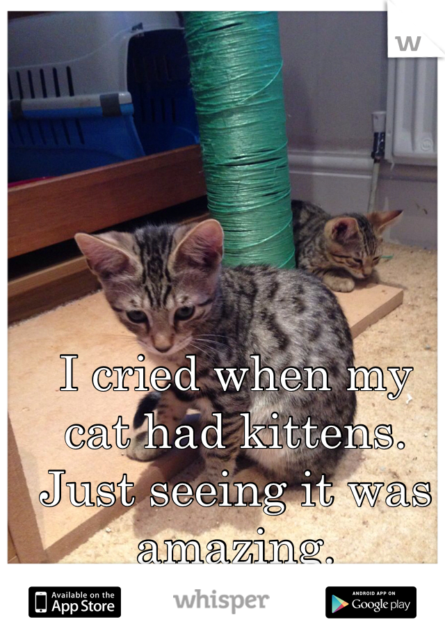 I cried when my cat had kittens. Just seeing it was amazing.