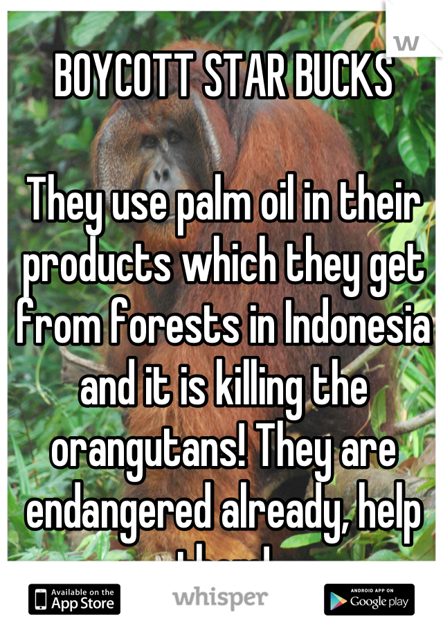 BOYCOTT STAR BUCKS  They use palm oil in their products which they get from forests in Indonesia and it is killing the orangutans! They are endangered already, help them!