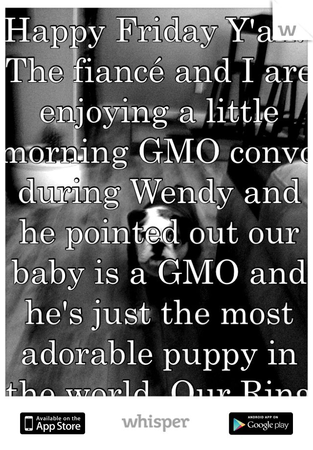 Happy Friday Y'all!!  The fiancé and I are enjoying a little morning GMO convo during Wendy and he pointed out our baby is a GMO and he's just the most adorable puppy in the world. Our Ring bearer! ;)