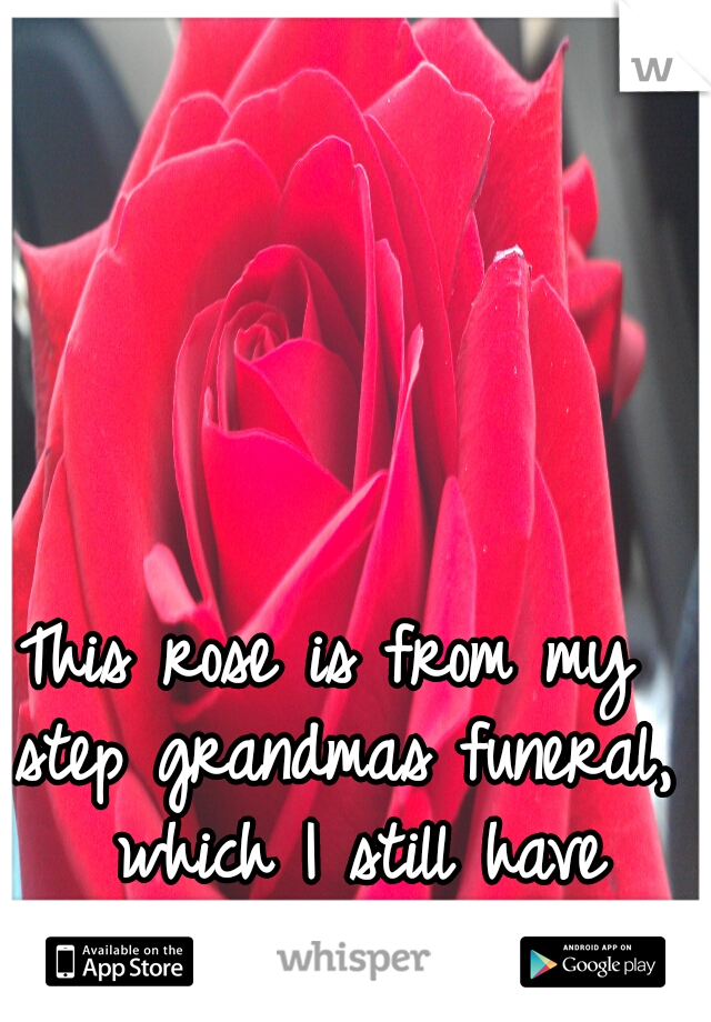 This rose is from my step grandmas funeral,  which I still have regrets over...