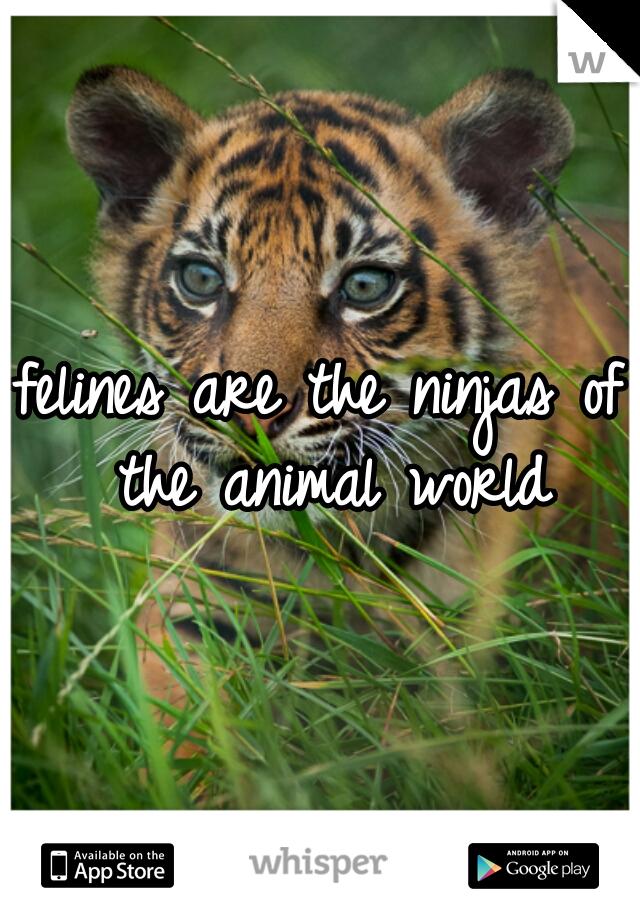 felines are the ninjas of the animal world