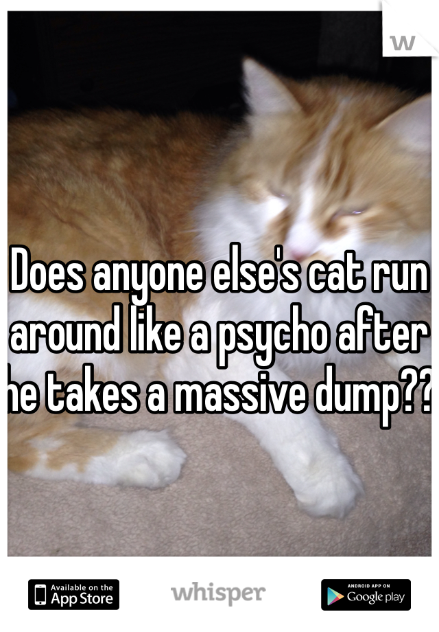 Does anyone else's cat run around like a psycho after he takes a massive dump??