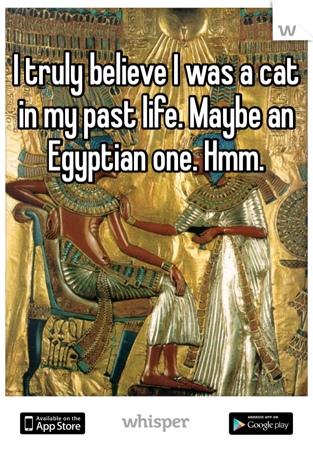 I truly believe I was a cat in my past life. Maybe an Egyptian one. Hmm.