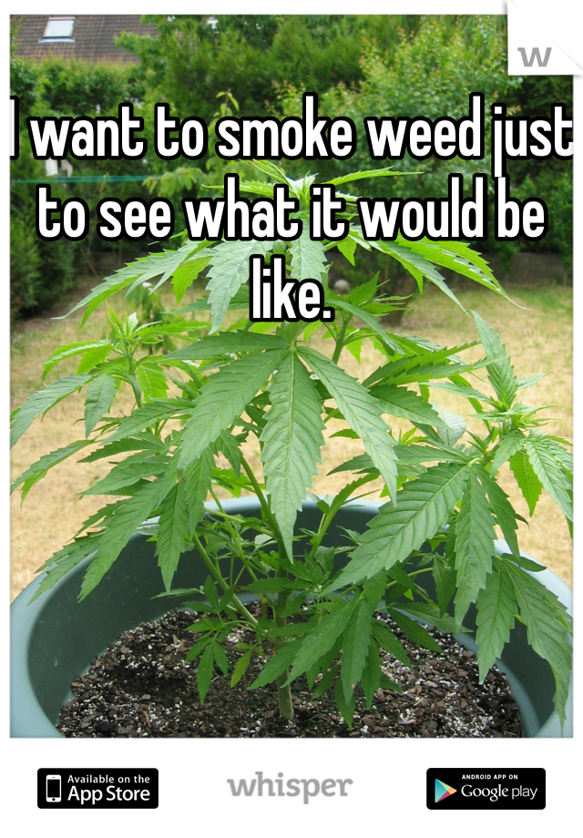 I want to smoke weed just to see what it would be like.