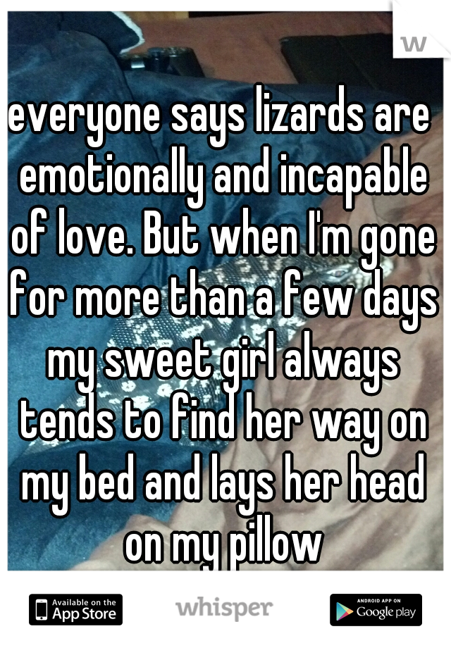 everyone says lizards are emotionally and incapable of love. But when I'm gone for more than a few days my sweet girl always tends to find her way on my bed and lays her head on my pillow