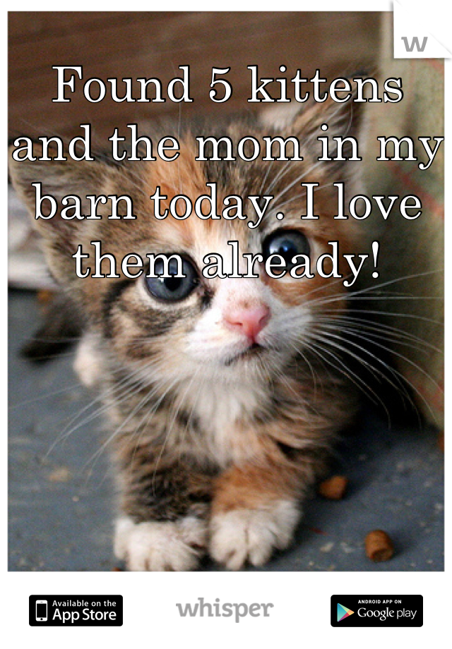 Found 5 kittens and the mom in my barn today. I love them already!