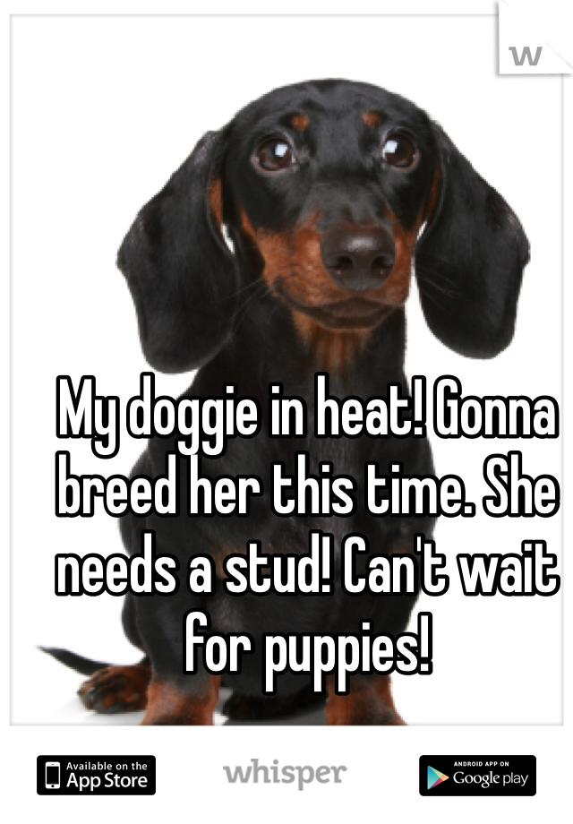 My doggie in heat! Gonna breed her this time. She needs a stud! Can't wait for puppies!