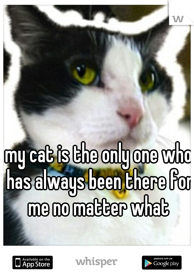 my cat is the only one who has always been there for me no matter what