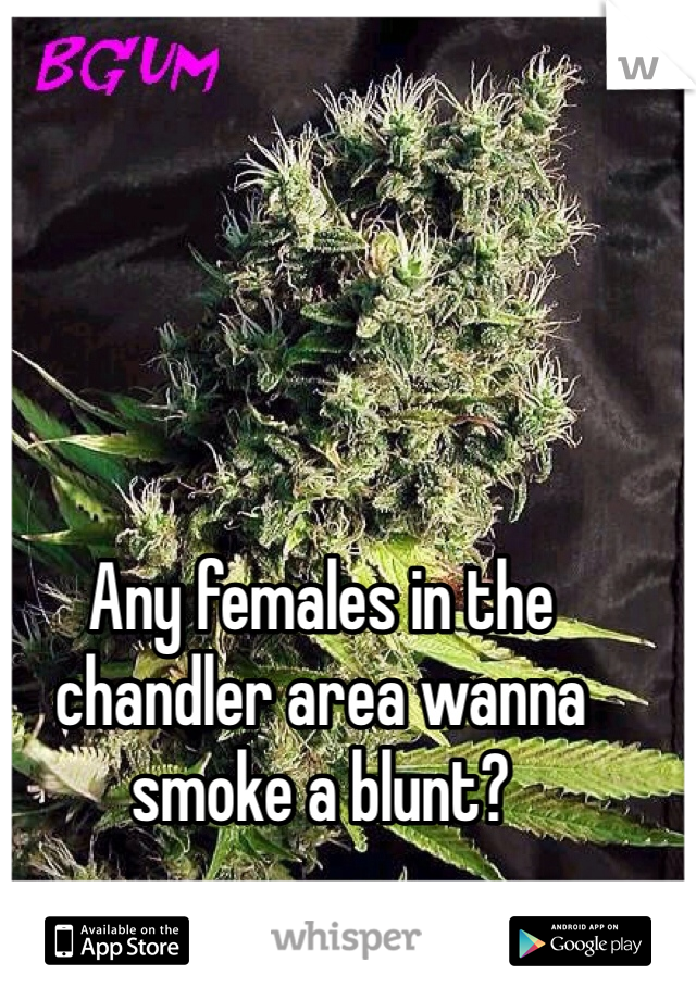 Any females in the chandler area wanna smoke a blunt?