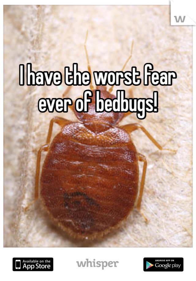 I have the worst fear ever of bedbugs!