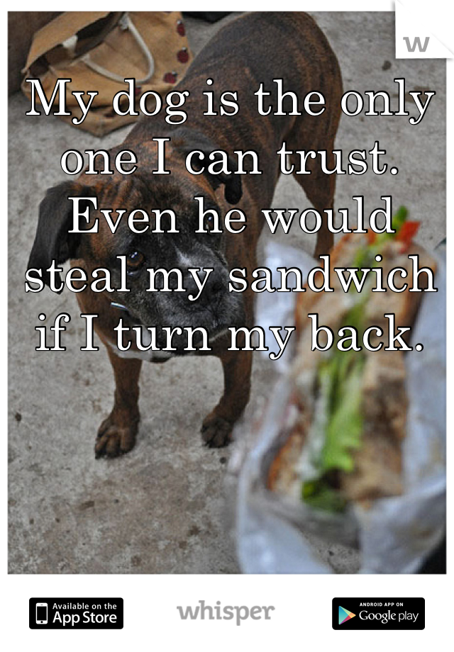 My dog is the only one I can trust. Even he would steal my sandwich if I turn my back.