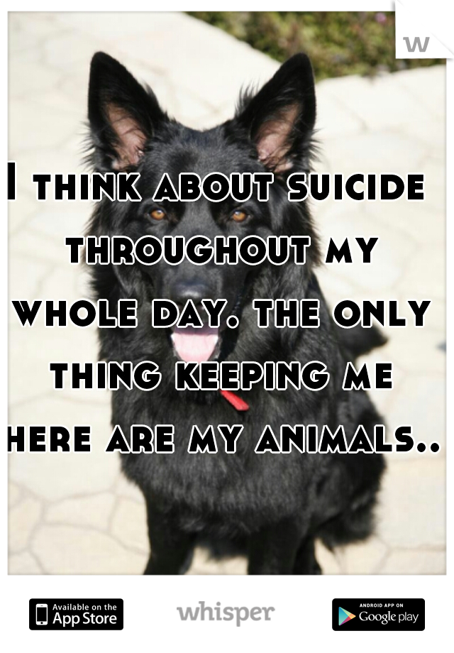 I think about suicide throughout my whole day. the only thing keeping me here are my animals..