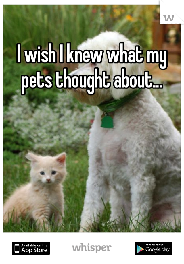 I wish I knew what my pets thought about...