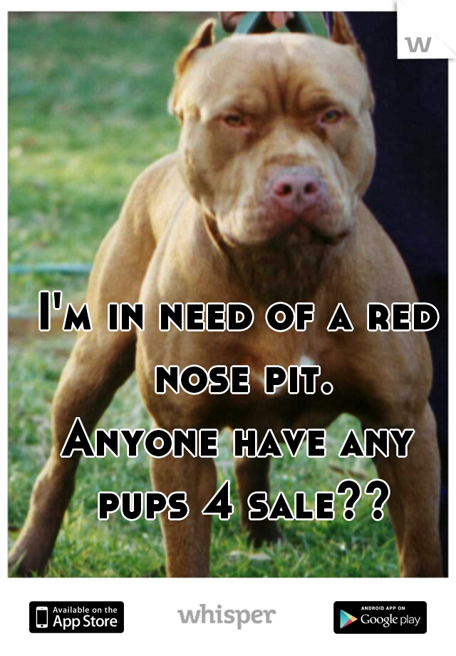 I'm in need of a red nose pit. Anyone have any pups 4 sale??