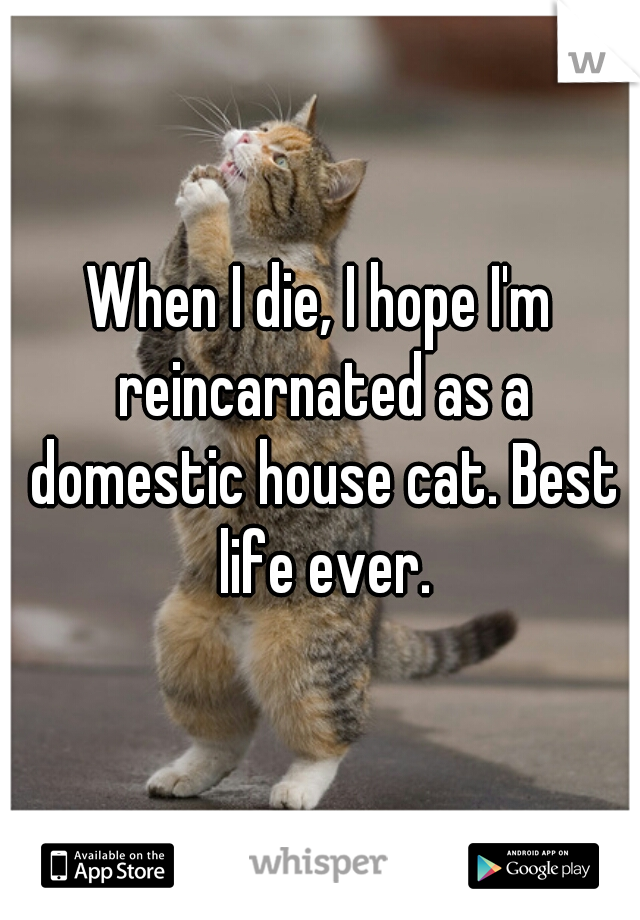 When I die, I hope I'm reincarnated as a domestic house cat. Best life ever.