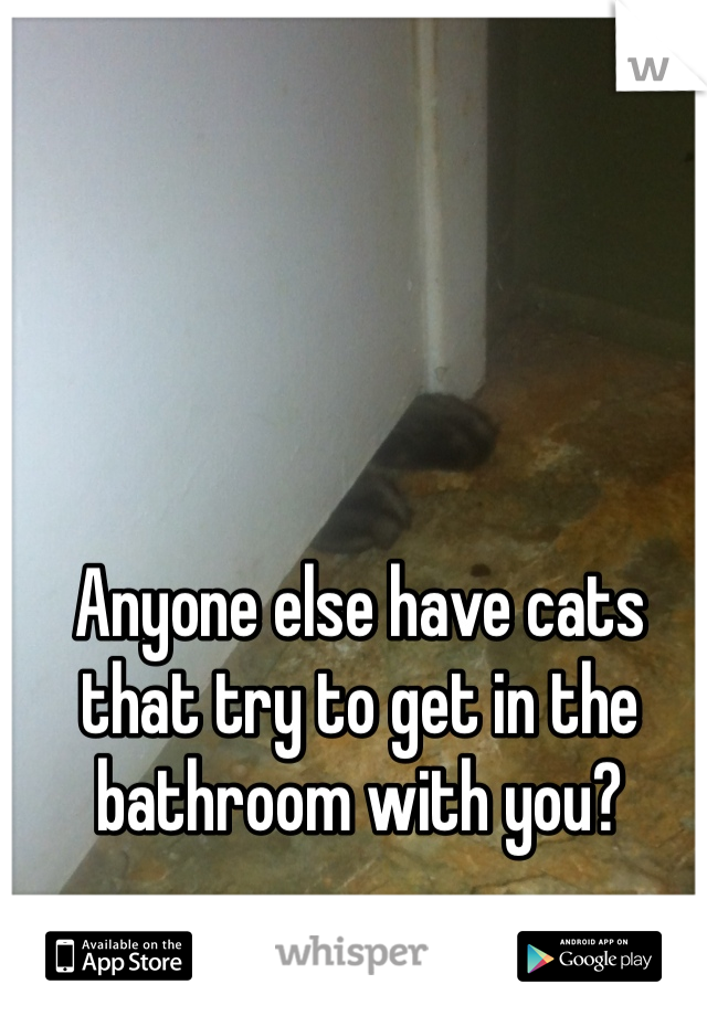 Anyone else have cats that try to get in the bathroom with you?