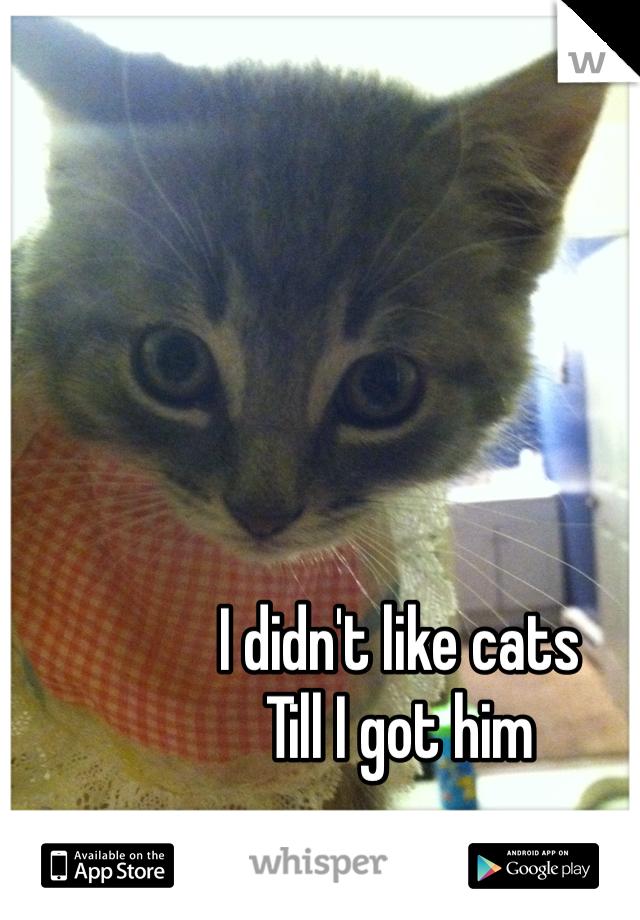 I didn't like cats Till I got him