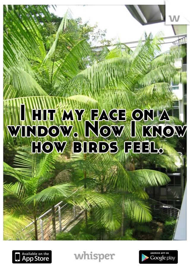 I hit my face on a window. Now I know how birds feel.