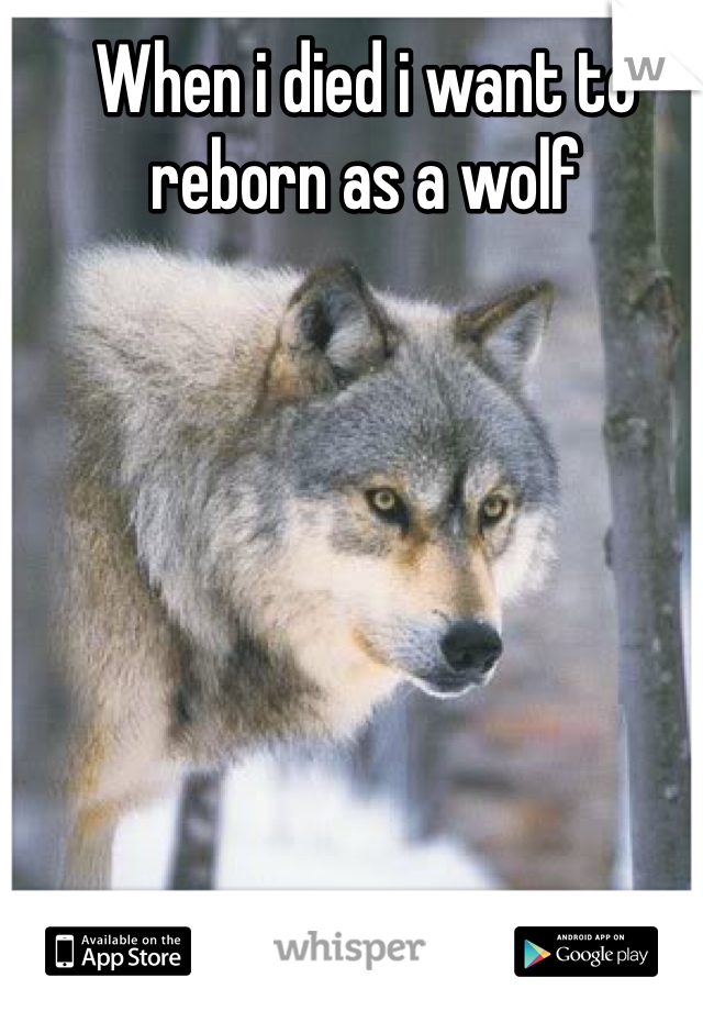 When i died i want to reborn as a wolf