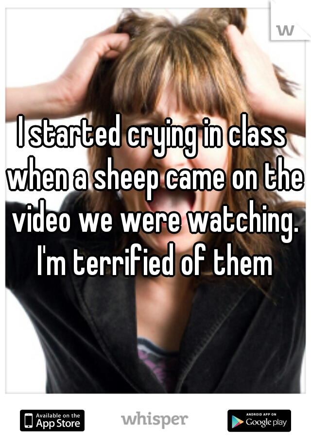 I started crying in class when a sheep came on the video we were watching. I'm terrified of them