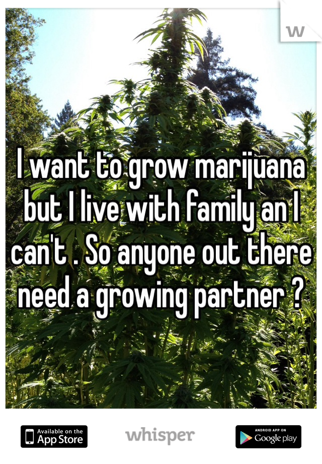 I want to grow marijuana but I live with family an I can't . So anyone out there need a growing partner ?